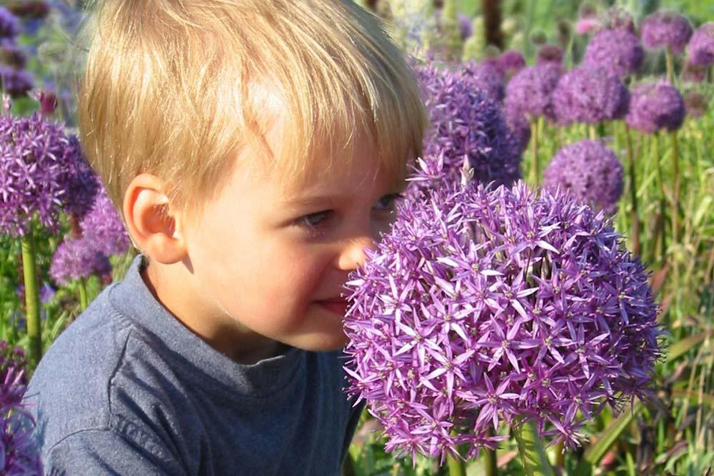 Kinderfreundliche Pflanzen